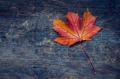 Предпосылка осени с лист падения Стоковое Изображение RF