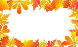 Предпосылка осени с падая листьями и ягодами рябины Бесплатная Иллюстрация