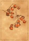 Предпосылка осени с померанцовым физалисом Стоковая Фотография RF