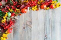 Предпосылка осени с сезонными ягодами, тыквами, яблоками и цветками природы осени Стоковая Фотография