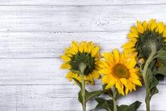 Предпосылка осени с солнцецветами Стоковое Фото