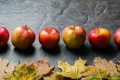Предпосылка осени темные или рамка упаденных листьев желтого цвета и зрелых красных яблок Рамка для текста или фото Применимый дл Стоковое Изображение