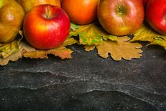 Предпосылка осени темные или рамка упаденных листьев желтого цвета и зрелых красных яблок Рамка для текста или фото Применимый дл Стоковое фото RF