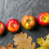 Предпосылка осени темные или рамка упаденных листьев желтого цвета и зрелых красных яблок Рамка для текста или фото Применимый дл Стоковые Изображения RF