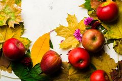 Предпосылка осени теплая упаденных листьев желтого цвета и зрелых красных яблок Рамка для текста или фото Применимый для статьи Стоковая Фотография RF