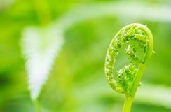 Предпосылка отмелый DoF природы зеленая с космосом экземпляра, папоротником новым le Стоковое фото RF