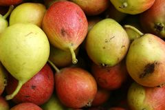 Предпосылка от зрелой груши плодоовощ Зрелый сбор груши плодоовощей Стоковые Фото
