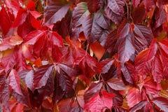 Предпосылка от листьев Стоковое Фото
