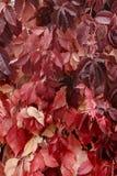 Предпосылка от листьев Стоковая Фотография