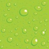 предпосылка падает зеленый безшовный вектор Стоковые Фото