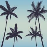 Предпосылка пальм Стоковые Фото