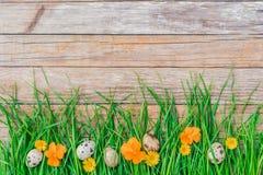 Предпосылка пасхи с лугом зеленой травы с яичками и красивыми цветками Стоковые Изображения