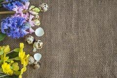 Предпосылка пасхи с рамкой цветков весны и яичек триперсток дальше Стоковое Фото