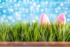 Предпосылка пасхи с ушами зеленой травы и bunnie стоковые изображения rf