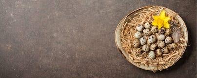 Предпосылка пасхи с яичками триперсток и весна цветут Стоковое фото RF