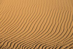Предпосылка песчанных дюн Стоковые Фото