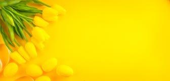 предпосылка покрасила вектор тюльпана формы пасхальныхя eps8 красный Яркие желтые яичка и пук тюльпана весны зацветая цветут над  Стоковое фото RF