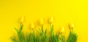 предпосылка покрасила вектор тюльпана формы пасхальныхя eps8 красный Цветки тюльпана яркой желтой весны зацветая и свежая трава н Стоковое фото RF