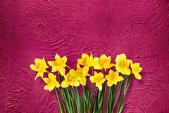Предпосылка праздника флористическая красная с цветками daffodils Стоковое Фото