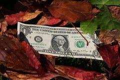 предпосылка представляет счет листья одно доллара Стоковая Фотография RF