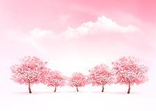 Предпосылка природы весны с розовым зацветая деревом Сакуры Стоковое Изображение