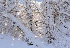 Предпосылка природы, в зиме Стоковое фото RF