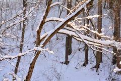 Предпосылка природы, в зиме Стоковые Изображения RF
