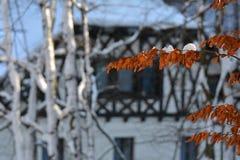 Предпосылка природы, в зиме Стоковые Фото