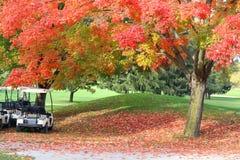 Предпосылка природы в цветах осени Стоковые Фотографии RF