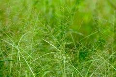Предпосылка природы конспекта зеленой травы Стоковая Фотография