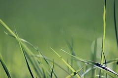 Предпосылка природы лета зеленой травы стоковая фотография