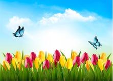 Предпосылка природы с зеленой травой, цветками и бабочкой Стоковые Фото