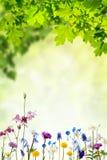 Предпосылка природы с цветками и листьями Стоковое Изображение RF