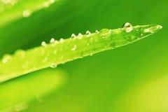 Предпосылка природы травы стоковые изображения rf
