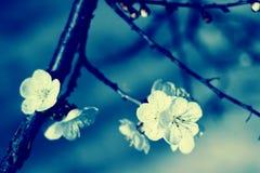 Предпосылка природы флористическая Стоковое Изображение RF