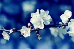 Предпосылка природы флористическая Стоковые Фото
