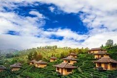 Предпосылка природы Baan Raks плантации и дома чая тайская Стоковое Фото