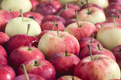 Предпосылка при вверх тонизированный конец предпосылки сбора яблок малой предпосылки яблок деревянной красивый малый Стоковая Фотография