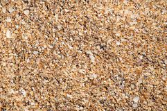 предпосылка разделяет seashells Стоковое фото RF