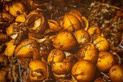 Предпосылка раковины кокоса Стоковые Изображения RF