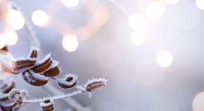 Предпосылка рождества; Голубой ландшафт рождества зимы; зима co Стоковое Изображение RF
