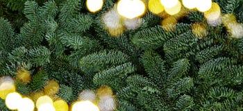 Предпосылка рождества с вечнозеленым деревом Стоковое Изображение