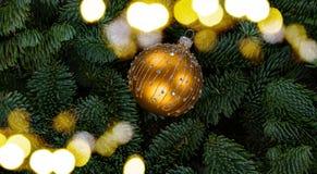 Предпосылка рождества с вечнозеленым деревом Стоковое фото RF