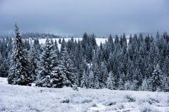 Предпосылка рождества с снежными елями стоковое фото