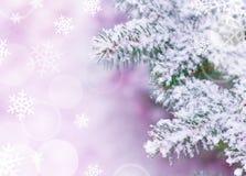 Предпосылка рождества с Fir-tree и снежком Стоковое фото RF