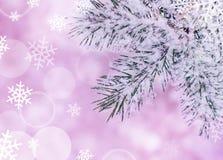 Предпосылка рождества с Fir-tree и снежком Стоковые Изображения RF