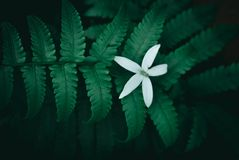 Предпосылка самой лучшей природы зеленая и свежая Стоковое Изображение
