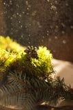 Предпосылка свежего зеленого мха стоковые изображения
