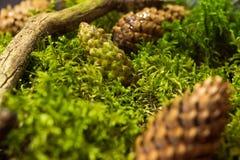Предпосылка свежего зеленого мха стоковая фотография rf