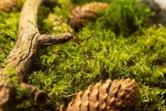 Предпосылка свежего зеленого мха Стоковая Фотография